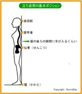 骨のライン